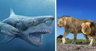 15 affascinanti immagini ci mostrano gli animali odierni a confronto con i loro antenati preistorici