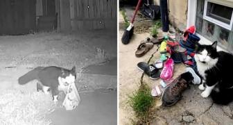Gato adora roubar sapatos de todos os vizinhos: a tutora descobre e abre um grupo no Facebook para devolvê-los