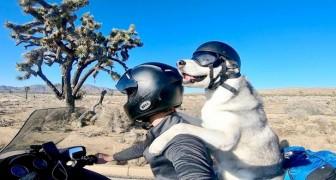 Quest'uomo ha intrapreso un incredibile viaggio in moto insieme al suo husky: hanno percorso 5000 chilometri