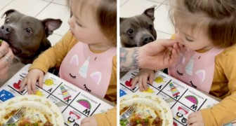 Una bambina si rifiuta di mangiare la verdura: quando vede il cane mangiarla al posto suo, ci ripensa