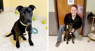 El cachorro es sacrificado en la perrera pero se despierta después de pocos minutos: una familia lo adopta