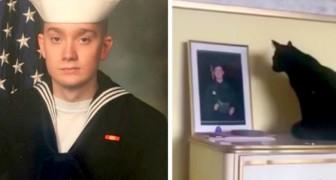 Ele sai para o serviço militar e a gata espera por ele todos os dias em frente a sua foto na mesinha de cabeceira