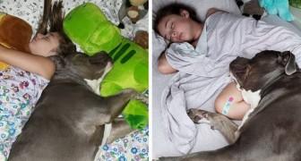 Dit kleine meisje en haar hond zijn zo onafscheidelijk dat ze niet meer apart kunnen slapen