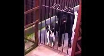 Een man groet een klein hondje. Zijn reactie... HILARISCH!