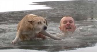 Cachorro cai em um lago congelado: um jornalista o salva mergulhando na água gelada