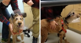 A blind dog can see after surgery: the video of his irrepressible joy