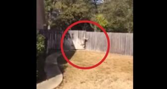 He hears cries from the backyard, someone needs immediate help!