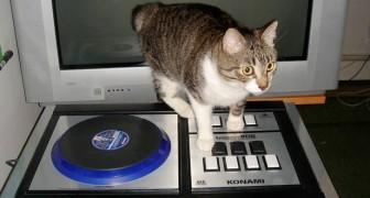 Allein zu Hause gelassene Katze schaltet aus Versehen laute Musik an: von den Nachbarn angezeigt