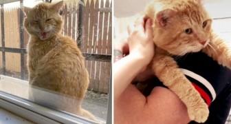 Streunendes Kätzchen taucht jeden Tag vor dem Fenster eines Mädchens auf und bittet um Einlass