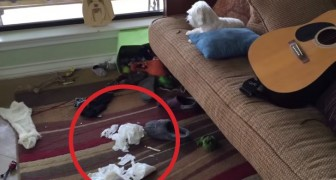 He enters the house and it's a total mess: the way he finds the guilty one is hilarious