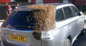 Riesiger Schwarm von 20.000 Bienen verfolgt zwei Tage lang ein Auto: Sie mussten die Königin retten