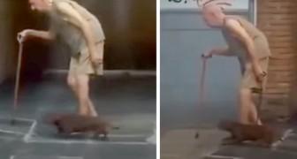 Teckel loopt in het langzame tempo van zijn bejaarde baasje: een demonstratie van enorme trouw