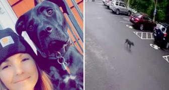 Hondje loopt weg van huis om zich bij haar baasje op het werk te voegen: ze dacht dat ze in de steek werd gelaten