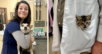 15 veterinários que não puderam deixar de mostrar ao mundo seus pacientes mais fofos