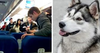 Il cane guida sale sull'aereo per accompagnare il suo padrone: il comportamento del cucciolo a bordo è sorprendente