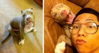 Jongen vindt zijn ontvoerde hond terug door meer dan 1000 kilometer te reizen om hem te redden