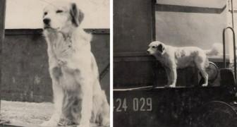 Den här hunden lärde sig att färdas med tåg ensam för att kunna åka och hälsa på sin mänskliga vän