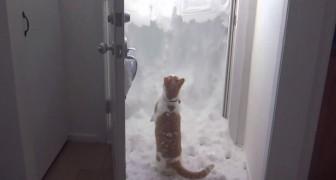 Vuole disperatamente uscire ma c'è troppa neve: ecco come si dà da fare!