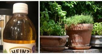 Aceto in giardino: scopri come usarlo per la cura del tuo angolo verde