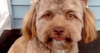 Deze hond heeft het web geschokt vanwege zijn merkwaardige uiterlijk: zijn gezicht lijkt op dat van een mens