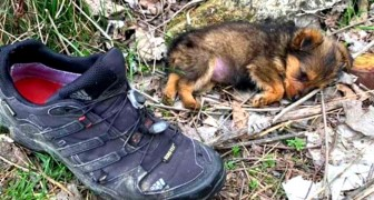 Een achtergelaten puppy schuilt achter een oude schoen: een man redt hem en geeft hem een tweede kans