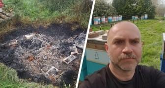 Uccidono un milione di api bruciando le arnie, l'apicoltore: sono devastato, erano la mia vita