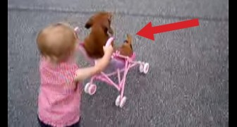 The little girl pushes the stroller and he relaxes: these 2 are hilarious !