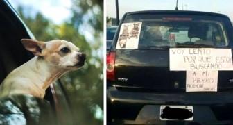 Pierde a su amigo de 4 patas y escribe un cartel en el auto: Voy despacio porque busco a mi perro