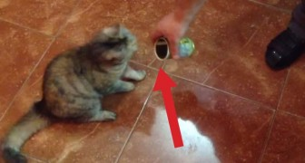 Here's how a cat reacts in front of a can of olives. Can you believe it?
