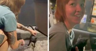 De går ut för att äta på en snabbmatsrestaurang och kommer tillbaka med en kattunge som de hittat på gatan
