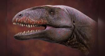 Scoperti in Uzbekistan i resti fossili dell'imponente dinosauro con denti da squalo