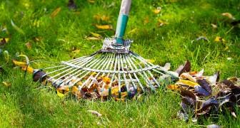Prenez soin de votre pelouse après les fortes chaleurs de l'été : voici ce que vous avez à faire pendant l'automne