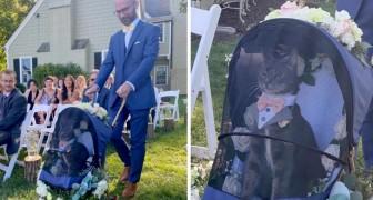 Katze trägt die Eheringe ihrer Besitzer in einem eleganten Anzug: das Ergebnis ist urkomisch