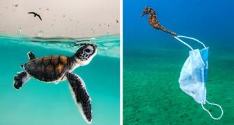 16 foto's van finalisten van deze wedstrijd laten ons de wonderen en zwakheden van onze zeeën zien