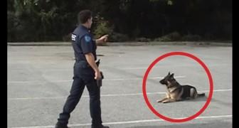 L'agent pointe seulement un doigt: regardez ce que fait le chien