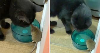 Joven descubre que su gato hizo amistad con el ratón que persigue desde hace días