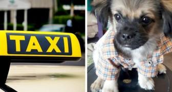 Hennes hund kommer tillbaka hem själv i en taxi efter det att hon tappat bort den på marknaden
