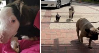 Wir stellen vor: Peabody, das kleinste Pferd der Welt, das sich für einen Hund hält