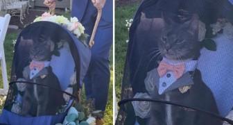 Cet élégant dandy à 4 pattes a volé la vedette aux mariés lors de leur mariage