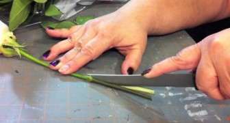 She cuts the stems of some roses into 4: her experiment gives a colorful result !