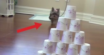 She's only 7 months old but incredibly clever. What this cute puppy can do will leave you speechless!