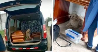 Cachorrinho se recusa a deixar o caixão de sua tutora no dia de seu funeral
