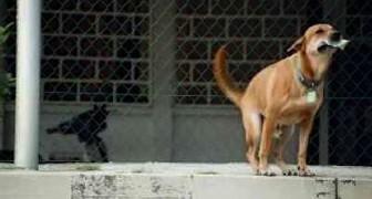 Dieser Hund hat einen Geldschein im Maul: Der Grund wird euch zum Lachen bringen!