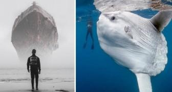 15 immagini di oggetti e animali talmente grandi da farci sentire piccoli e spaesati