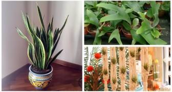 Découvrez les plantes parfaites à garder à la maison pour absorber l'humidité
