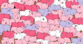 Es gibt nicht nur Elefanten: Siehst du das Herz, das sich in diesem Bild versteckt?
