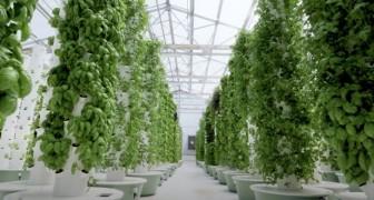 Agricoltura aeroponica: l'innovativa tecnica che consente di coltivare in assenza di terreno