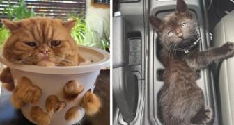 Gatti allo stato liquido: 15 foto ci dimostrano che possono adattarsi qualsiasi forma