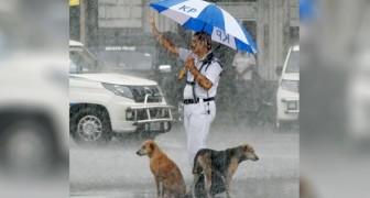 O guarda de trânsito compartilha seu guarda-chuva com dois cães de rua: queria protegê-los da tempestade