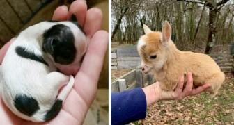 Simplemente adorables: 16 cachorros que han derretido nuestro corazón de tanta dulzura